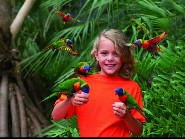 La volière à Loris du Parc des oiseaux