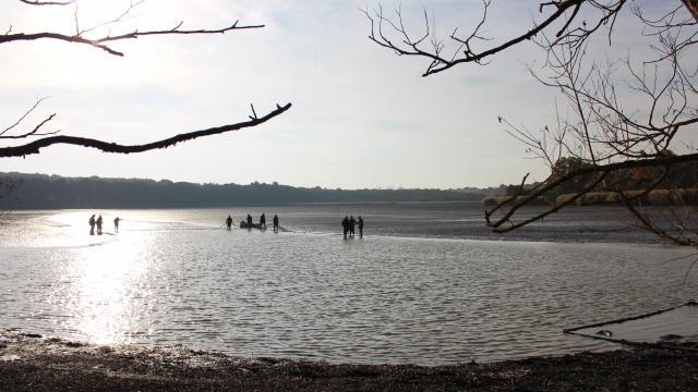 Pêche des étangs de la Dombes