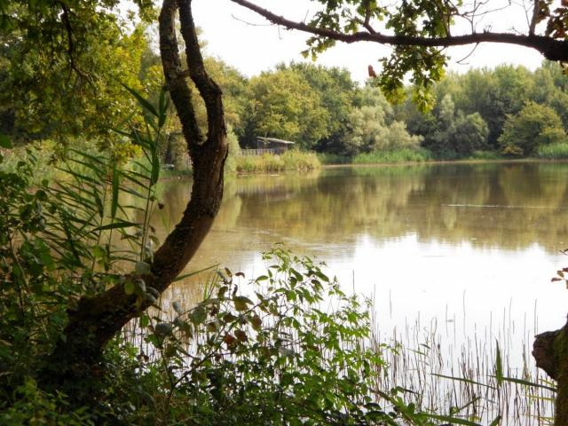 Vue sur l'étang et l'observatoire de Vernange