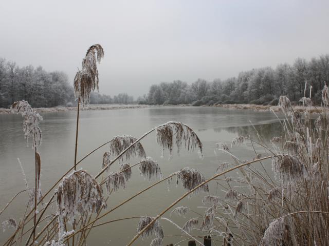 Les Etangs de la Dombes en hiver
