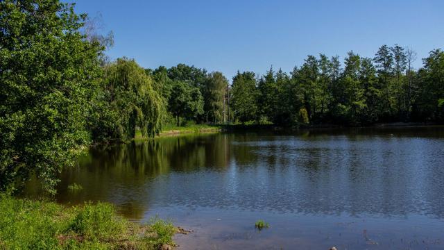 Randonnée proche de Lyon au bord des étangs de la Dombes