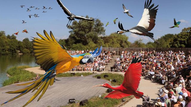 Spectacle des oiseaux en plein vol