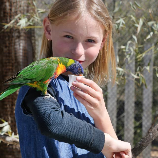 Voliere des Loris au parc des oiseaux