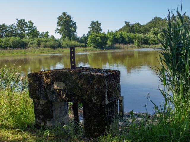 Thou d'un étang de la Dombes