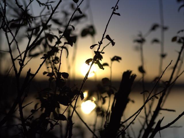 Lever de soleil au bord d'un étang dans la Dombes
