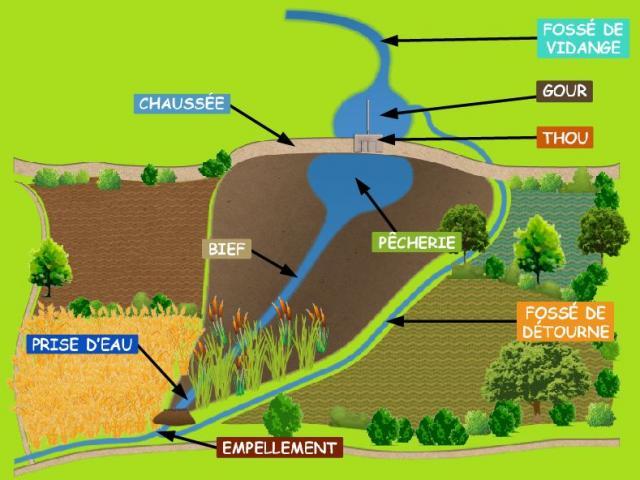 Plan du fonctionnement d'un étang dans la Dombes