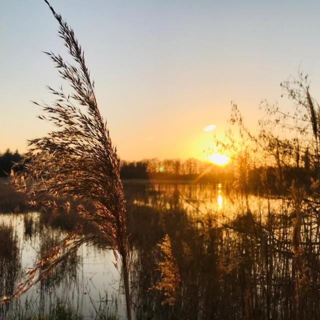 Etangs de Dombes au coucher du soleil