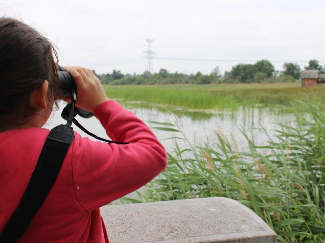 Observation des oiseaux au bord d'un étang de la Dombes