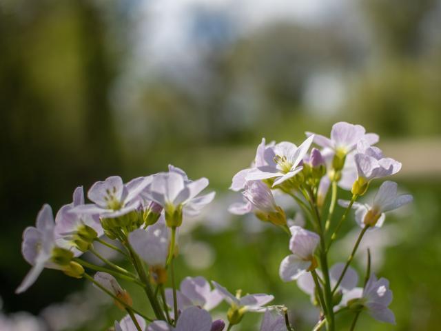 Fleurs sur chemins de randonnée proche de Lyon