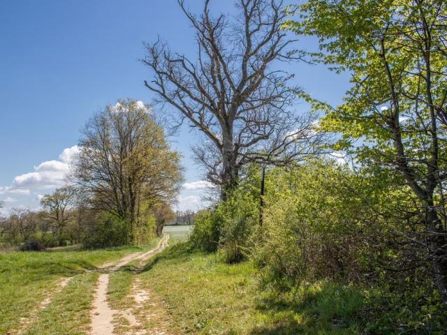 Circuit de Randonnée en Dombes proche de Lyon