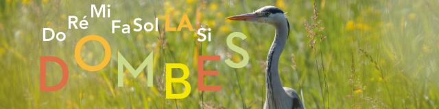 La Dombes et ses oiseaux