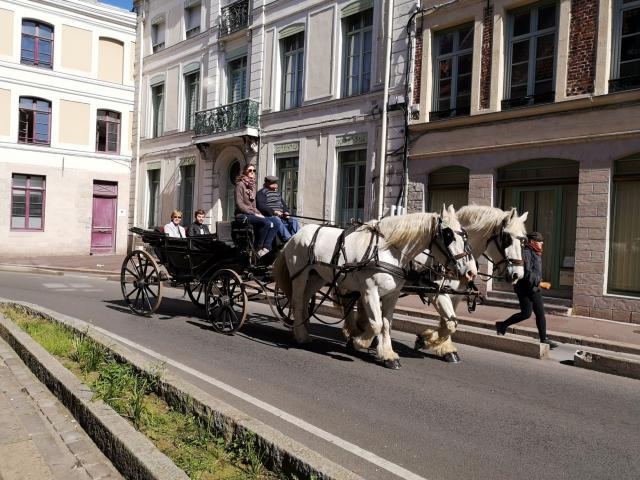 Balade Calèche Cheval Chevaux Douai Douaisis Nord France (8)