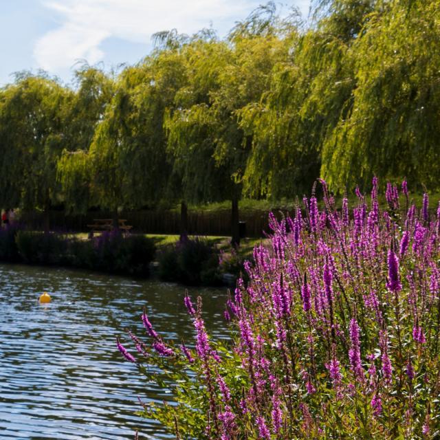 Parc Jacques Vernier Douai Douaisis Nord France (c) Adlanglet