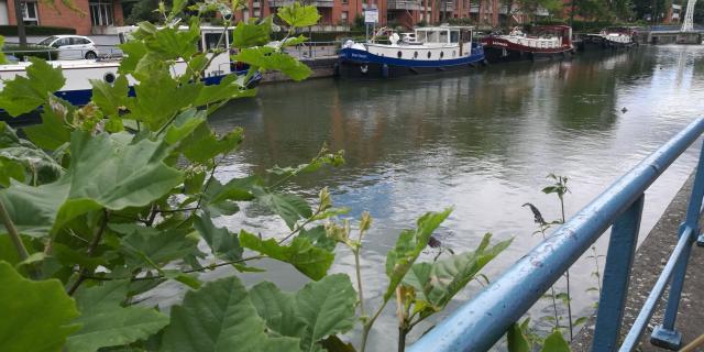 Scarpe Quai De La Barque Douai Douaisis Nord France