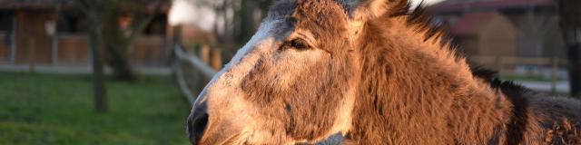 Centre Equestre (2)
