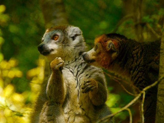 Reserve Zoologique Calviac Lemuriens