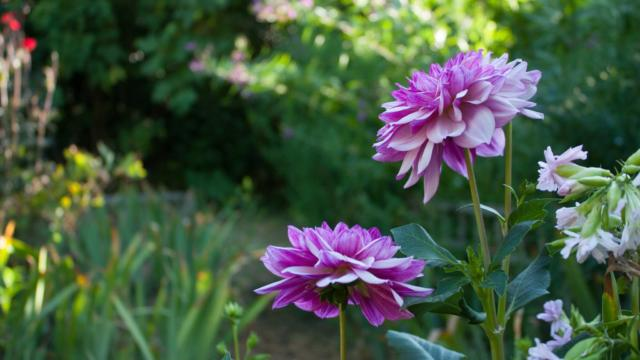 Jardins De Cadiot Fleurs