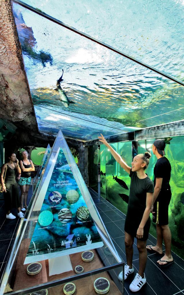 Aquarium Perigord Noir