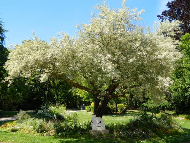 Arbres Jardin Plantes @nathalie Philippe