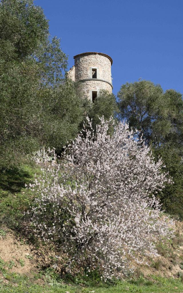 Chateau De Grimaud Var (3)