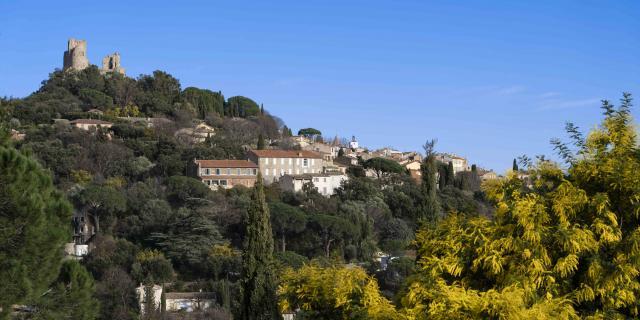 Mimosa Provence Grimaud Var (8)