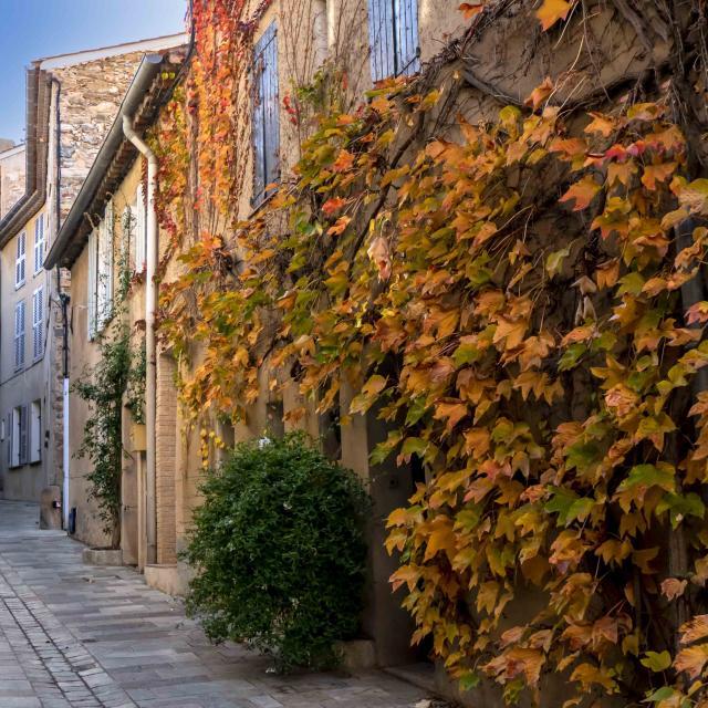 Automne Grimaud Var Provence (1)