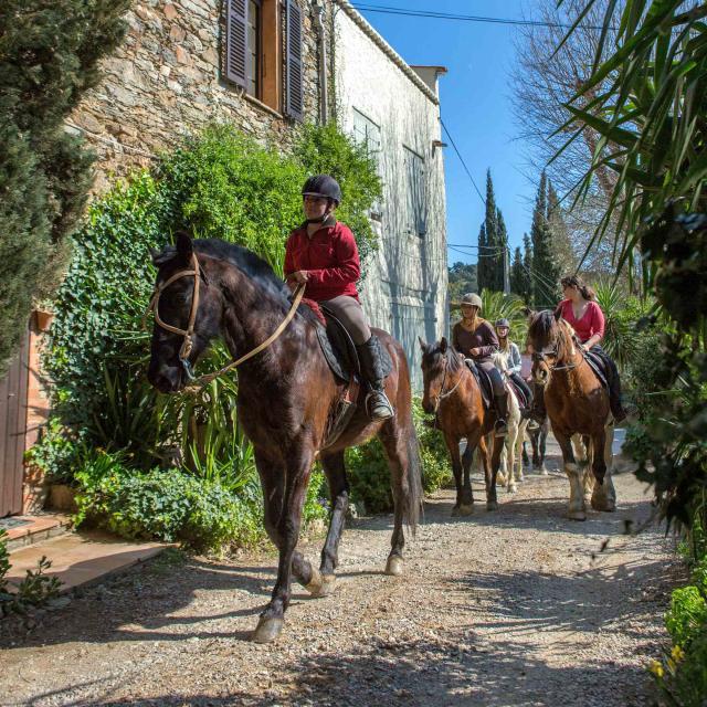 Balade Cheval Provence Grimaud Var (2)