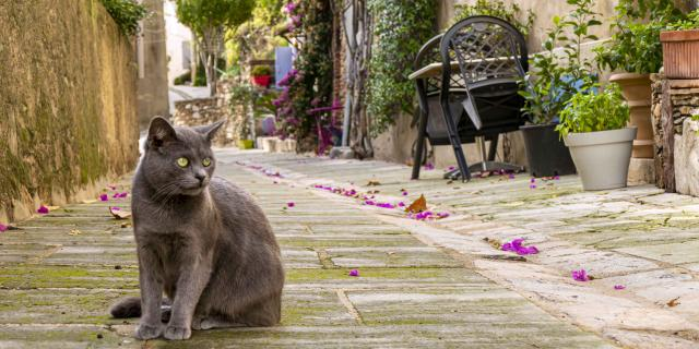 Chat Grimaud Provence (10)