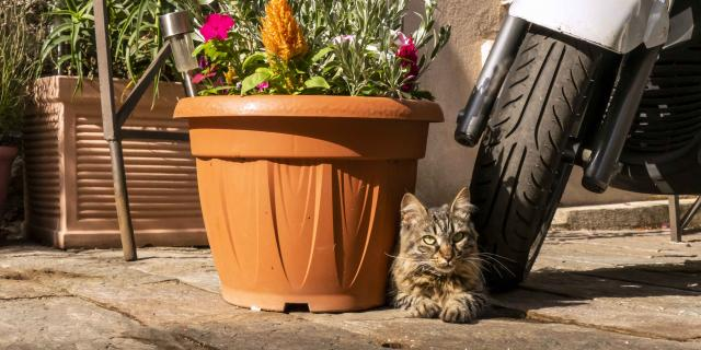 Chat Grimaud Provence (13)