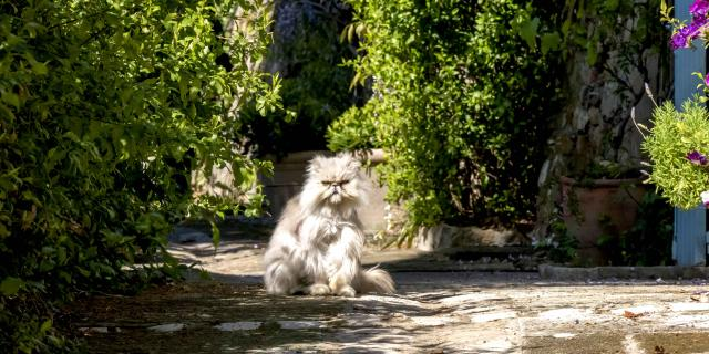 Chat Grimaud Provence (15)