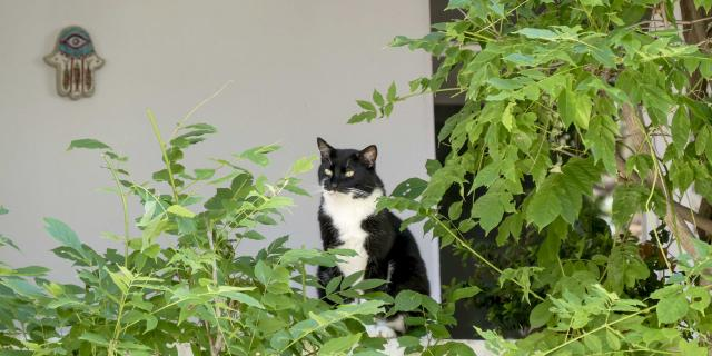 Chat Grimaud Provence (19)