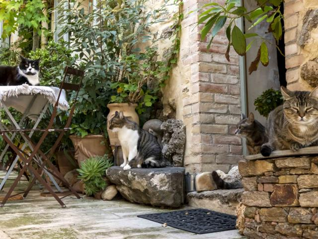 Chat Grimaud Provence (21)
