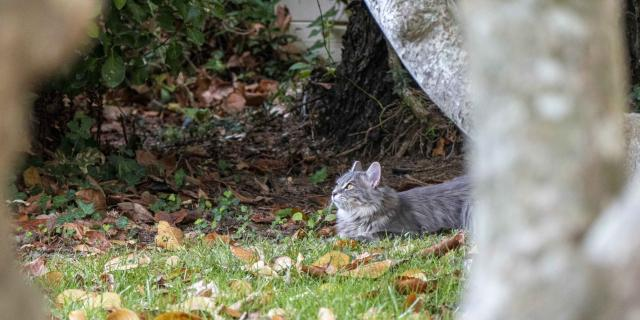 Chat Grimaud Provence (25)