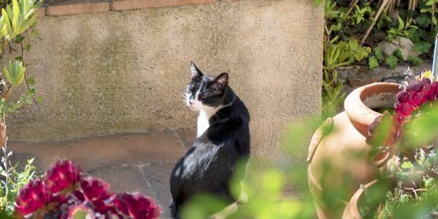 Chat Grimaud Provence (5)