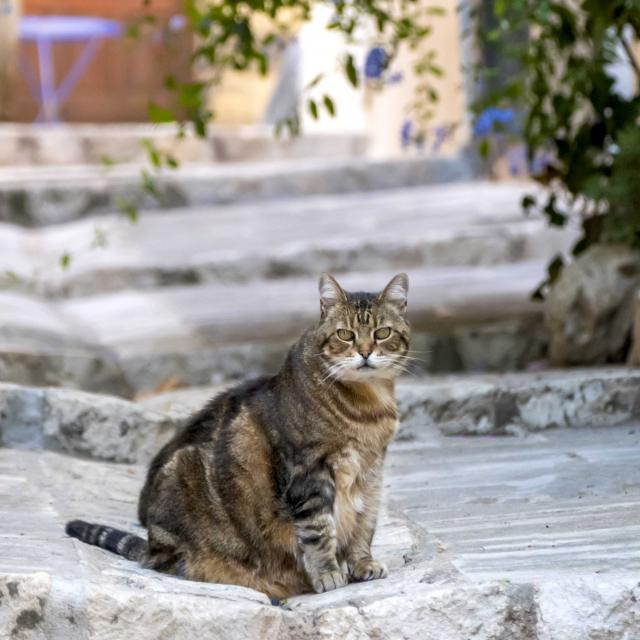 Chat Grimaud Provence (8)