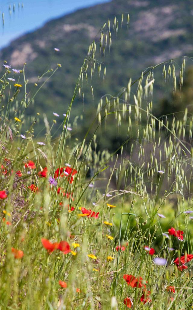 Massif Des Maures Grimaud Var Provence (10)
