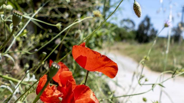 Massif Des Maures Grimaud Var Provence (12)
