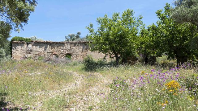 Massif Des Maures Grimaud Var Provence (15)
