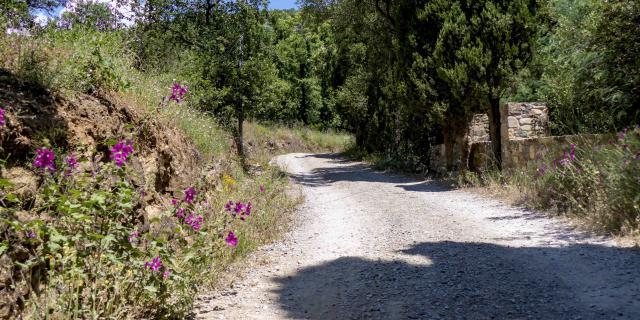 Massif Des Maures Grimaud Var Provence (17)
