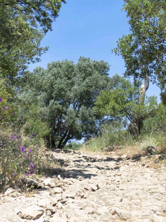 Massif Des Maures Grimaud Var Provence (21)