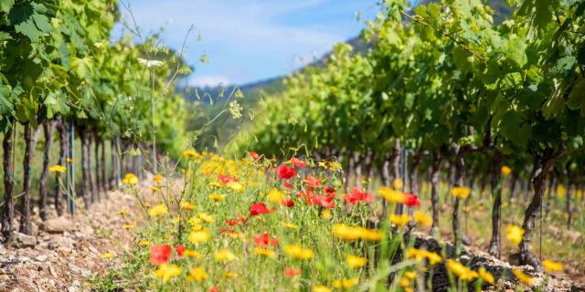 Massif Des Maures Grimaud Var Provence (7)