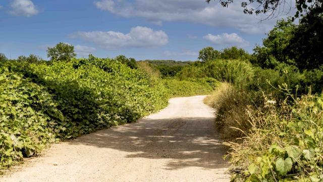 Sentier Peyron Grimaud Var (7)