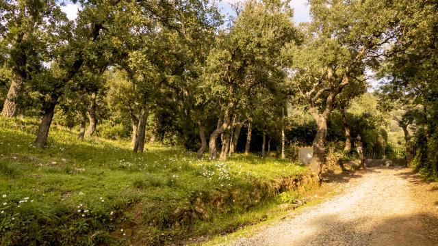 Sentier Pierredon Var (3)