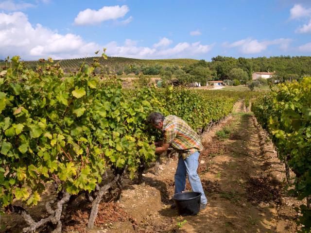 Vignoble Provence Grimaud Var (1)