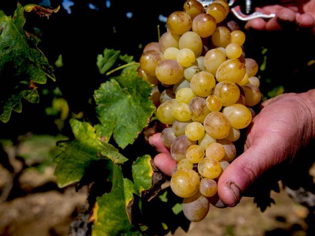 Vignoble Provence Grimaud Var (13)