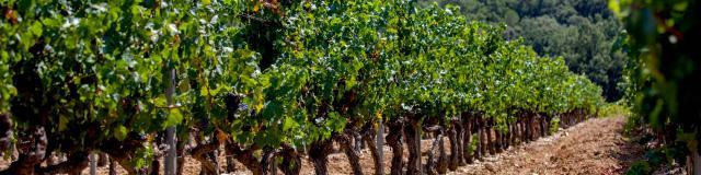 Vignoble Provence Grimaud Var (3)