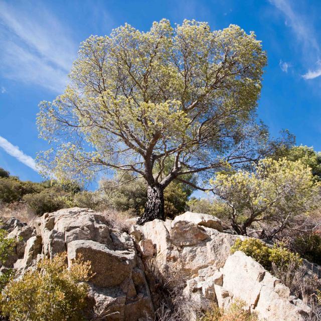 Massif Des Maures Grimaud Var Provence (40)