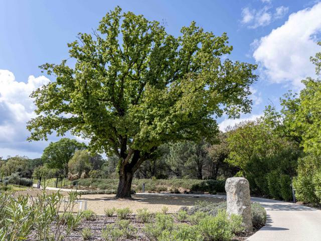Menhirs En Provence Grimaud Var (5)
