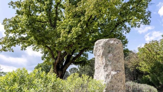 Menhirs En Provence Grimaud Var (6)