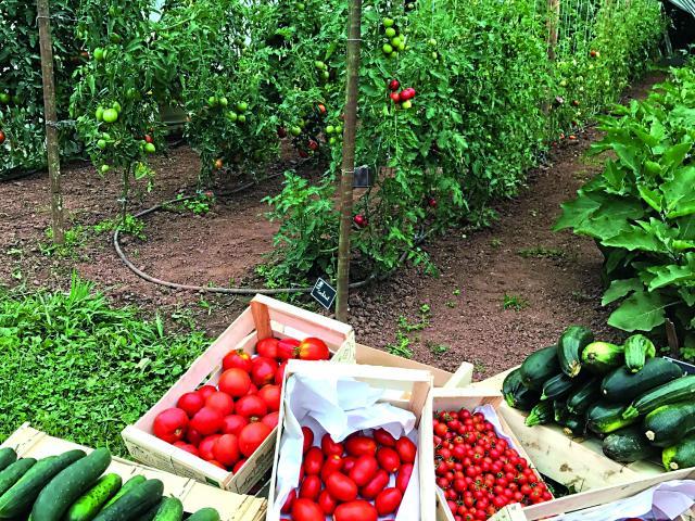 Légumes Jardin Potager 2017